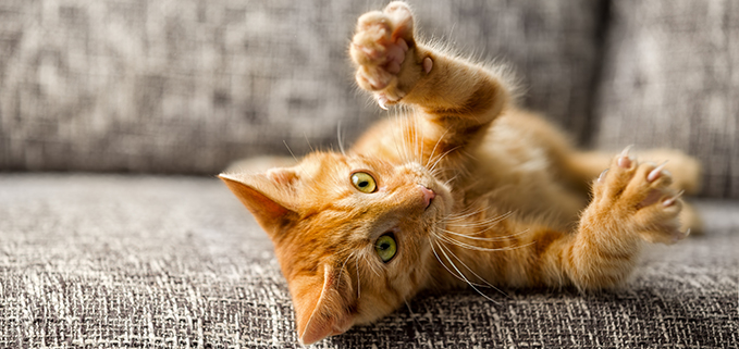 Orange Cat on Couch
